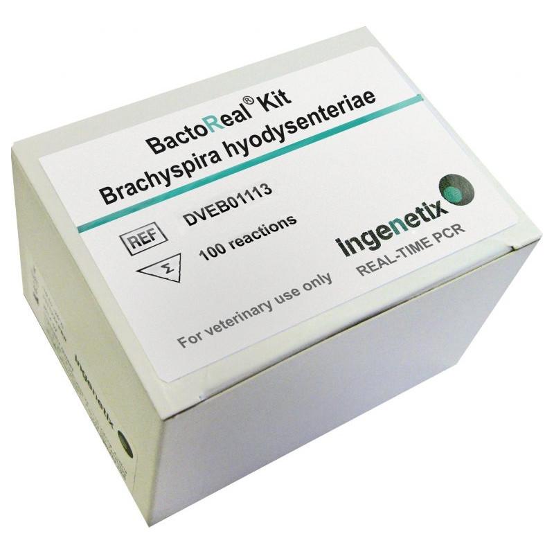 BactoReal Kit Brachyspira...