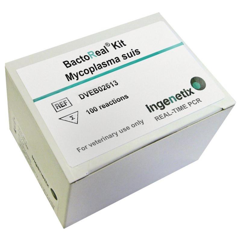 BactoReal Kit Mycoplasma suis